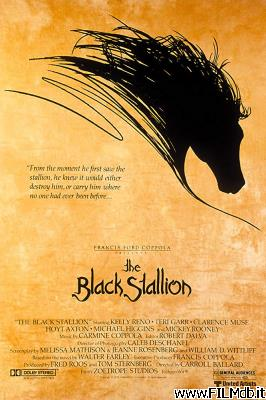 Locandina del film black stallion
